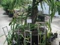 Edible Landscapes South Florida
