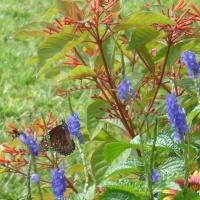 Specialty Gardens South Florida
