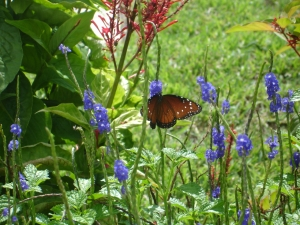 South Florida Butterfly Gardening for Beginners ...