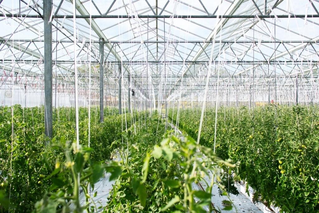 Botanical Visions Edible Landscape South Florida